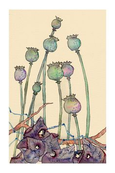 Wildlife in Inks & Watercolours by Colleen Parker — Poppy seed pods Watercolor And Ink, Watercolor Flowers, Watercolor Paintings, Watercolors, Watercolor Pencils, Illustration Botanique, Art Et Illustration, Illustrations, Botanical Drawings