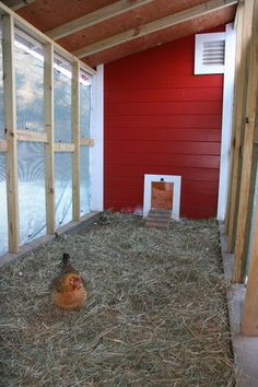 MN-Hardy 7'x8' Chicken Coop with Attached Run - BackYard Chickens Community