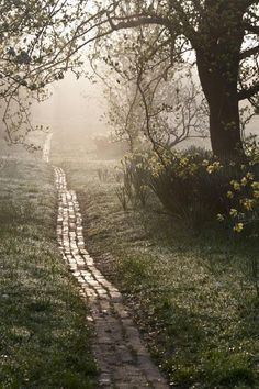 Path at Sunrise. Picture: Carol Casselden, International Garden Photographer of the YearOrchard Path at Sunrise. Picture: Carol Casselden, International Garden Photographer of the Year All Nature, Jolie Photo, Garden Care, Parcs, Dream Garden, Pathways, Garden Paths, Garden Inspiration, The Great Outdoors