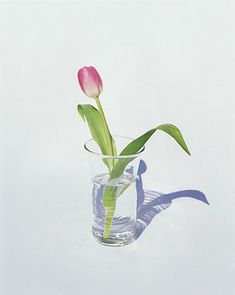 1997 FLOWERS, Yoshihiko Ueda 上田義彦