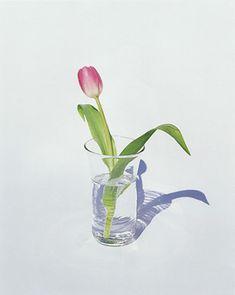 1997 FLOWERS