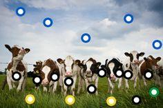 Interactieve praatplaat De koe. by Paula Prevoo