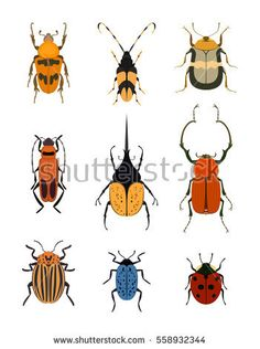 Bug icon set isolated on white background vector illustration. Ladybird, weevil, cockchafer, cockroach, colorado potato beetle. Color cartoon insect design, bug symbol collection, wildlife concept