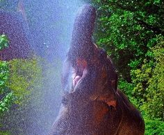 PetsLady's Pick: Funny Elephant Shower Pic Of The Day  ... see more at PetsLady.com ... The FUN site for Animal Lovers