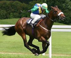"Maryland designated the thoroughbred as the official state horse in 2003. The average Thoroughbred stands 16 hands (64"") high at the withers and weighs 1,000 pounds. The color of a thoroughbred's coat may be bay, dark bay, chestnut, black, gray, or occasionally roan.http://www.statesymbolsusa.org/"