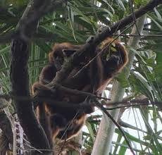 Resultado de imagem para Rio Grande do Sul + animais silvestres