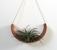 Hanging Air Cradle for an Air Plant - I am loving the air plants - have a few in my home.