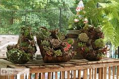 DIY Succulent Garden : DIY Succulent Wreath Tutorial