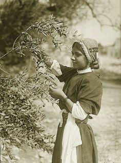Ramallah-رام الله: RAMALLAH - Maiden picking olives from tree, Ramallah area, early 20th c.
