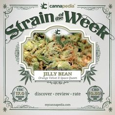 Featured Strain of the Week: Jilly Bean (#Orange #Velvet X #Space #Queen)  |  Discover • Review • Rate  http://bit.ly/zoZZ9L  #mmj #cannabis #420 #hybrid #thc #cbd