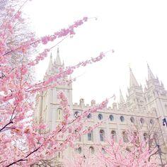 "From pinkpeonies.com, ""phone snaps of my weekend…"". Pink flowers church spring."