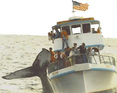 Whale watching off the coast of Maine is a dream for me.