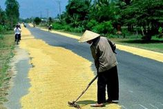 Drying rice ~ Vietnam