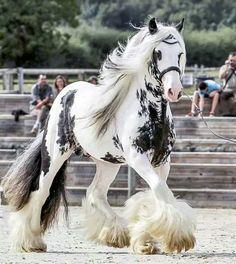 Beautiful horse Gray Horse, Beautiful Horses, Animals, Animales, Animaux, Animal, Dieren, Animais