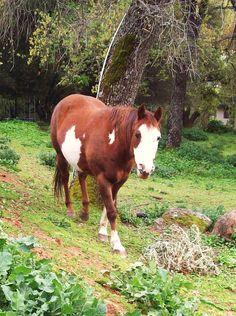 i miss my horsey! :(    love Quarter Horses <3