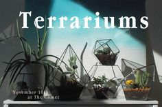 Handmade Terrariums out of Recycled Glass | JESSIE CUNDIFF