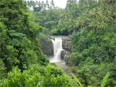 Tegenungan is one of the many tourist places and destination in Bali, it is popular with waterfall. Tegenungan waterfall lies at Tegenungan Village, approx. 5 kilometers, south east Ubud - See more at: http://www.thebalibible.com/hidden-waterfall#sthash.dC3uZekR.dpuf