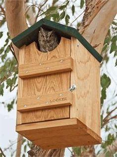 Screech Owl Bird House Plans   Looker Screech Owl House at www.wildbirdstoreonline.com #birdhouses