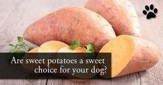 "It was a sad day when I found out my dog couldn't have sweet potato – especially for him. I literally can't say the ""s"" word without seeing his ears perk up, tail wag and …"