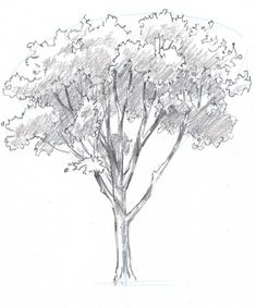 Learn how to draw trees in this simple step by step demonstration of the process of drawing an oak. #Drawing ideas pencil #Cute drawings #Drawings ideas #Things to draw