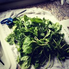 #Arugula is not like all the greens I cleaned... with other types I would have found a bug or two waiting to greet me! But arugula is different, it makes me wonder if it's a bug replete #Amman #Jordan
