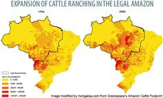 Beef drives 80% of Amazon deforestation