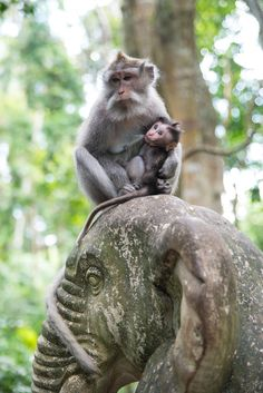 Ubud Monkey Forest, Bali by Matthias Regner www.villapantaibali.com  Don't forget when traveling that electronic pickpockets are everywhere. Always stay protected with an Rfid Blocking travel wallet. https://igogeer.com for more information. #igogeer