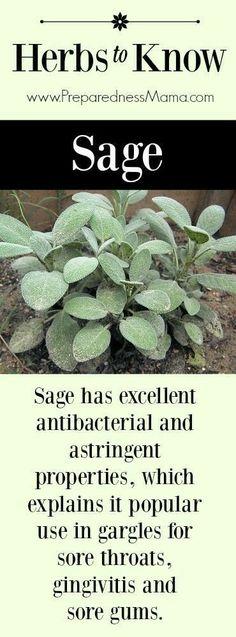 Sage culinary n medicinal