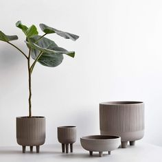 Please welcome the new large Bowl from Kristina Dam Design Studio. The Bowl is made from grey engobe colored terracotta and glaced inside to resist Large Plant Pots, Large Plants, Potted Plants, Ceramic Plant Pots, Keramik Design, Deco Addict, Bowl Designs, Terracotta Pots, Interior Accessories