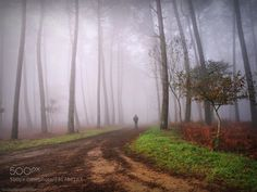 Morning mist. by Carballa. @go4fotos