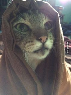These sands are cold, but Khajiit feels the warmth of your pesence