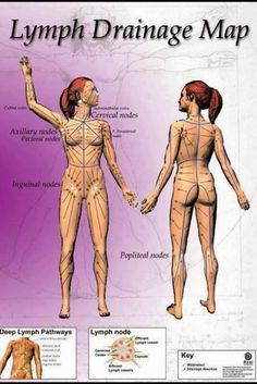 Lymph Drainage Map. Lymph drainage is very essential, without which the toxics…