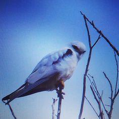 @ #portfairy #Australia #traveling  #adventure #bird #nerding by worldwidekarin
