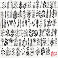 Leaf Botanical Clipart  84 Hand Drawn Leaf branches Clipart