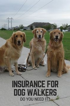 Insurance for dog walkers Pet Sitting Business, Dog Walking Business, Puppy Training Schedule, Dog Training, Training Tips, Obedience School For Dogs, Pet Dogs, Dogs And Puppies, Dog Christmas Pictures