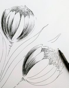 A drawing study of 2 Proteas - Modern Protea Art, Protea Flower, Art Sketches, Art Drawings, Flower Drawings, Flower Sketches, Drawing Flowers, Pencil Drawings, Botanical Line Drawing