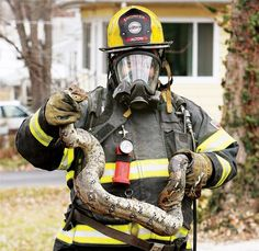 Fire Department engineer Craig Green holds the largest of five snakes found in the basement of 3310 Mayfield Ave