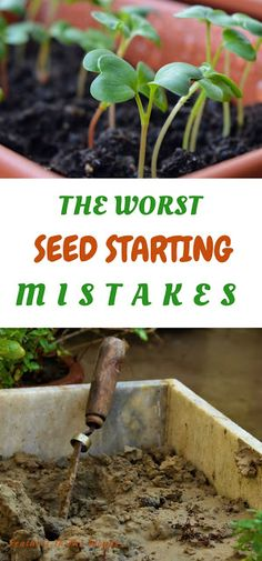 The worst mistakes I've made starting seeds. From not enough heat to the wrong soil, all the mistakes that kill off seedlings.