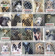 BEYOND URGENT FOR THESE DOGS !! 1 HR LEFT TO LIVE~~Updated list!!! Only 1 out of the building so far!!! Please Odessa, Texas we need fosters and adopters!!!