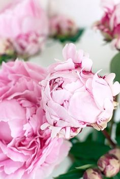 Peonies #peonies #flowers Get wowed with an amazing bouquet: http://www.bloomsybox.com/