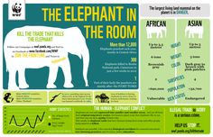 Elephant poaching. Protect the #environment #sustainability