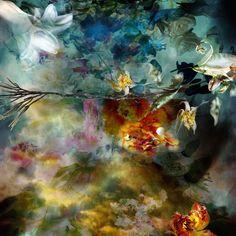 Выразительные фотографии цветов от бельгийской художницы. (6 фото)