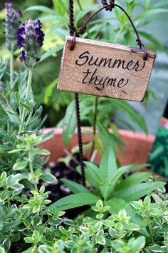 Herb Garden Ideas for Healthy Home. Lately many people are interested to make herb garden. This herbal garden contains medicinal plants that can be formulated into traditional medicines. Herb Garden, Vegetable Garden, Garden Art, Garden Whimsy, Garden Crafts, Garden Projects, Culture D'herbes, Garden Quotes, Garden Signs