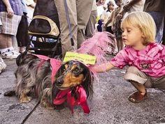 http://1.bp.blogspot.com/_4Buev2eybnY/SV434o-WsOI/AAAAAAAAEfk/a2oy2kxmHd4/s400/key+west+dachshund+walk+2.jpg