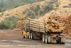 Cyclists Sues Log Truck Driver After Being Struck In the Head By Log | CDLLife