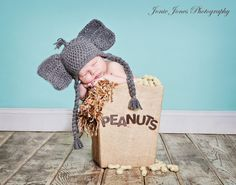 Newborn photography/elephant /peanuts/circus