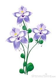 columbine flower drawing - Google Search