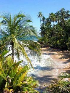 Playa Manzanillo, Limón