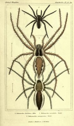 The animal kingdom, arranged according to its organization London :G. Henderson,1834. biodiversitylibrary.org/page/2458955