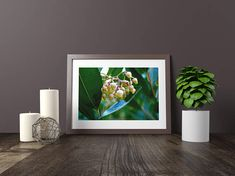 Tiny Bells Wall Art Nature Photography Printable Art Home